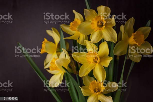 Bouquet of yellow daffodils on dark background spring blooming blog picture id1214535542?b=1&k=6&m=1214535542&s=612x612&h=i5iviltfxb kt5wwf5fmngp5vhvgrrtfqqltrc0espc=