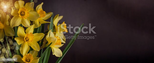 678639336 istock photo Bouquet of yellow daffodils on dark background. Spring blooming flowers Easter blog site banner low key modern style. 1214535787