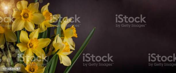Bouquet of yellow daffodils on dark background spring blooming blog picture id1214535787?b=1&k=6&m=1214535787&s=612x612&h=ttydaky2muq ao3pgkg7r2eyjbcxqlxcuyybke ekce=