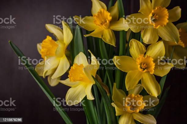 Bouquet of yellow daffodils on dark background spring blooming blog picture id1215876286?b=1&k=6&m=1215876286&s=612x612&h=qrk33ttldd 3k9a4vhb omwvjm0ib2k4gwyu yqpqhe=
