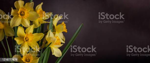 Bouquet of yellow daffodils on dark background spring blooming blog picture id1216777676?b=1&k=6&m=1216777676&s=612x612&h=wagzrlskk7jtium47 9s 7xi2hdycebqmcj58qlxhhs=