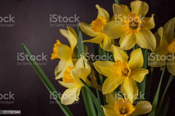 Bouquet of yellow daffodils on dark background spring blooming blog picture id1217201344?b=1&k=6&m=1217201344&s=612x612&h=se8xo5dpih9ivoztkrn fv6xnpdy0mki5wogeii2eyg=