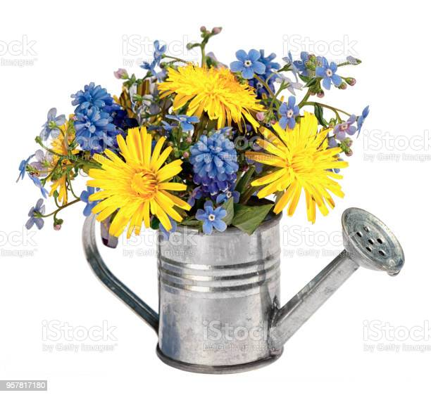 Photo of bouquet of yellow dandelions and blue hyacinths and forget me not flowers in a small toy decorative watering can isolated on white background