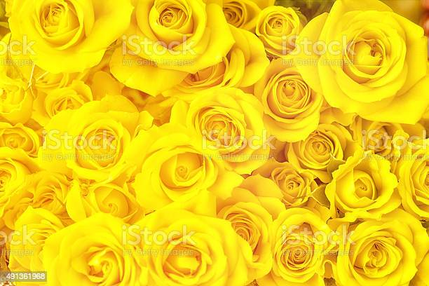 Bouquet of yellow roses full frame photography picture id491361968?b=1&k=6&m=491361968&s=612x612&h=tansbe0z2kyk2rybhlzzdnlgm1dgh ckgjatkxf5cee=