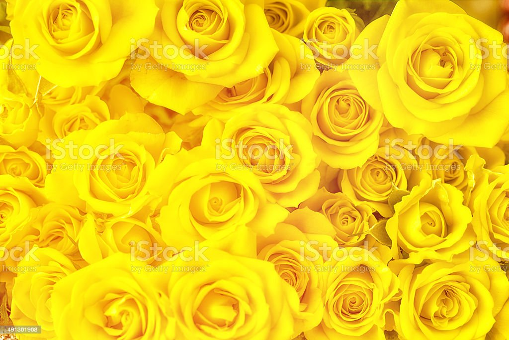 Bouquet of yellow roses full frame photography stock photo