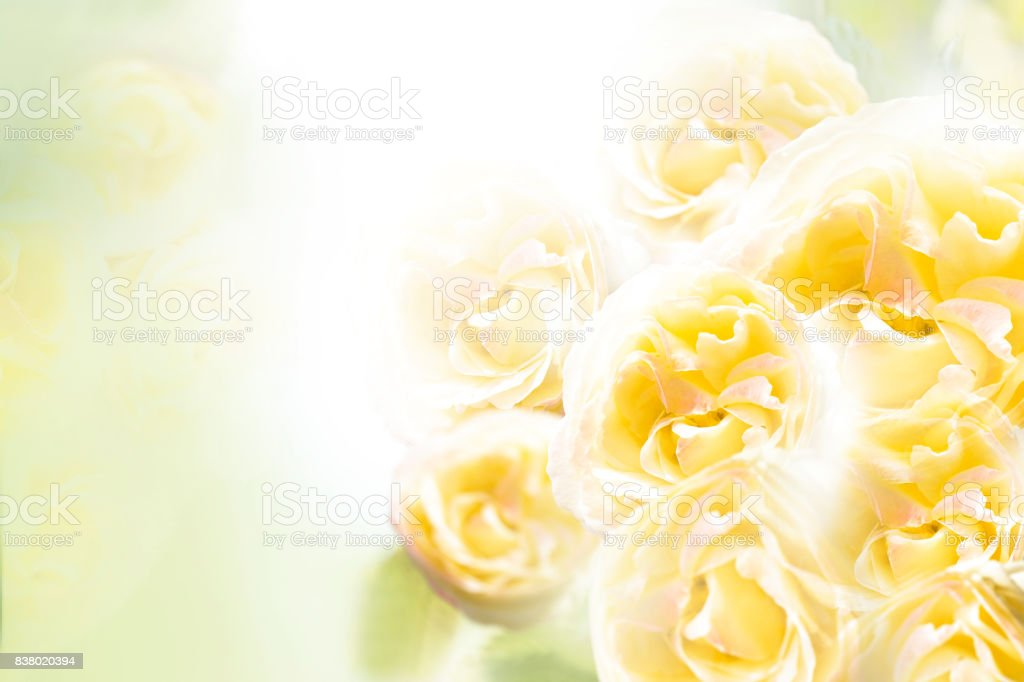 A bouquet of yellow roses on a white background. Floral background. Nature. стоковое фото