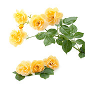 istock Bouquet of yellow roses. 1098415070