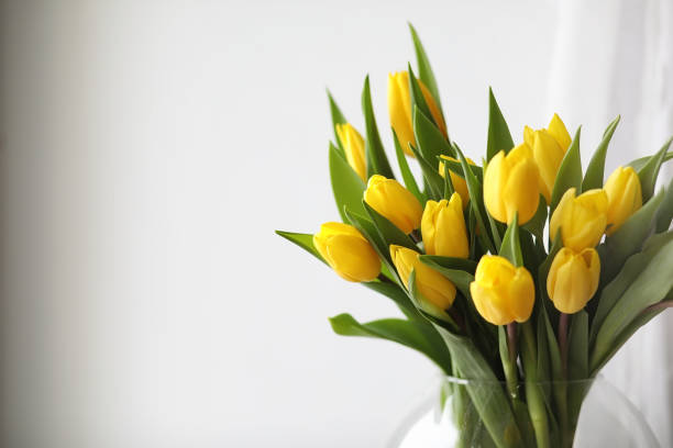 Bouquet of yellow tulips in a vase on the windowsill a gift t picture id915067286?b=1&k=6&m=915067286&s=612x612&w=0&h=gcabl84b978wfncxbsnp8q6pjk5mfwxc583zdedkyvm=