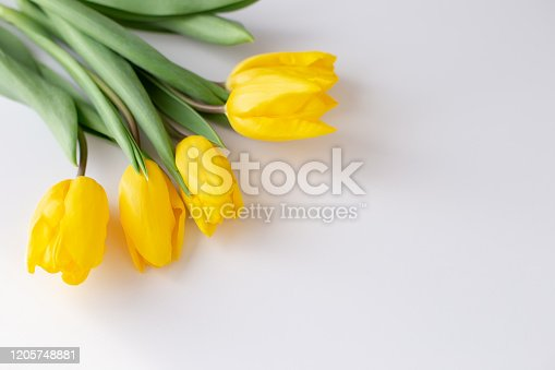 A bouquet of yellow tulips lies in the upper left corner on a white background.Top view. Close up. Copy spase