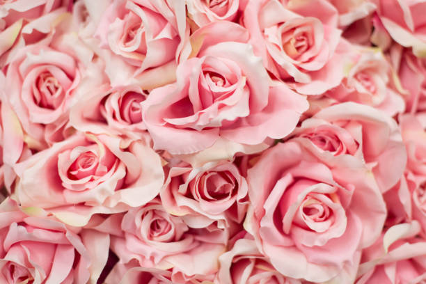 Bouquet pink artificial roses for background picture id899392706?b=1&k=6&m=899392706&s=612x612&w=0&h=cc58ls yth9zehns zoqnzv7uwf0d8dguro1ztq4uhg=