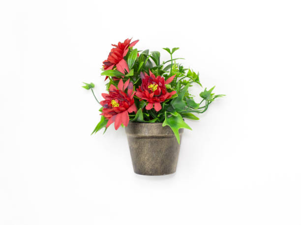 Bouquet red flowers in a pot isolated on white background picture id1181551587?b=1&k=6&m=1181551587&s=612x612&w=0&h=lamx9zbyuvhbhvagjesmprvxi0dczknscm6589vazra=