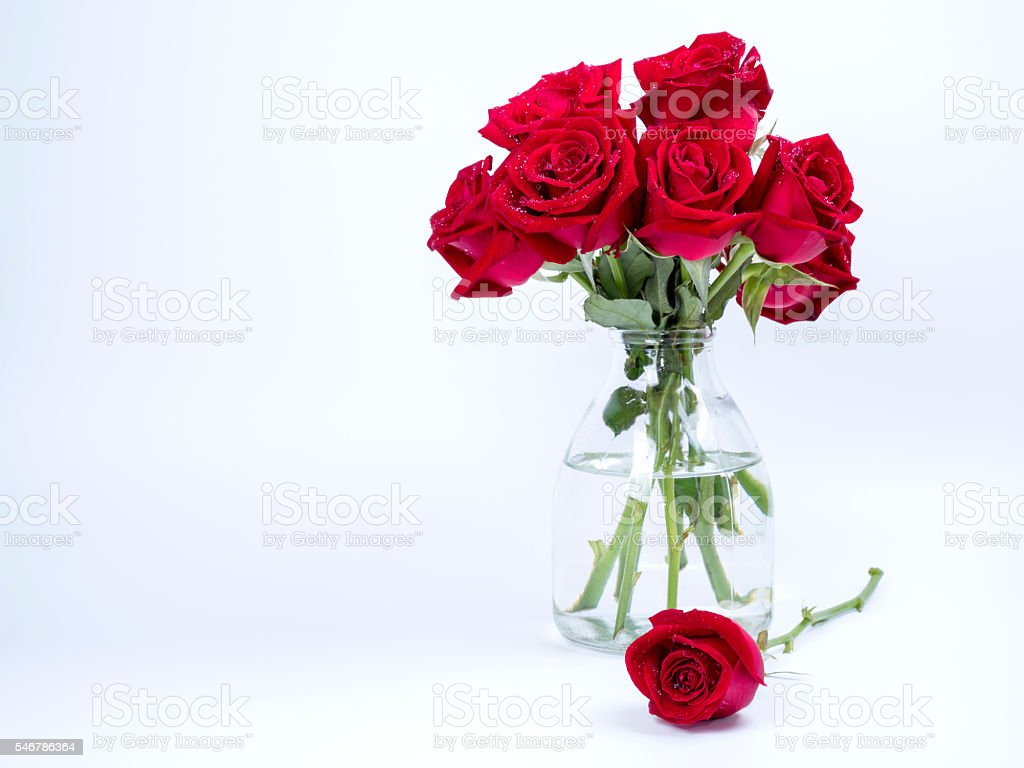 Bouquet red roses flower in glass bottle on isolated background stock photo
