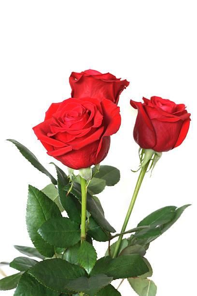 Bouquet roses picture id157376123?b=1&k=6&m=157376123&s=612x612&w=0&h=dodw 43nfoiqsst45txe3  pjszw2q6yuvm8mgmxero=