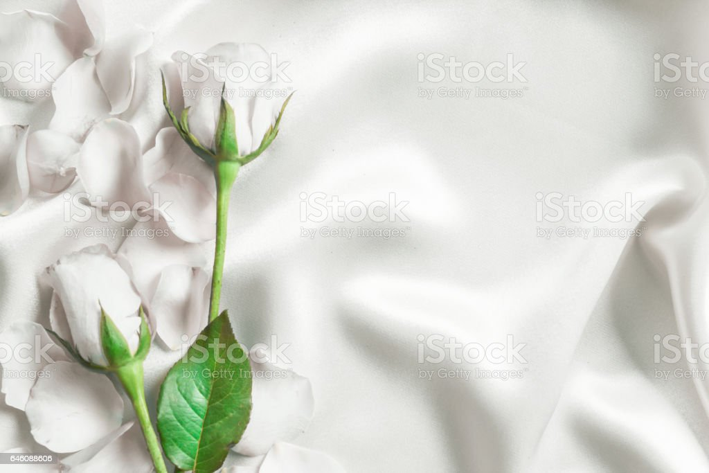 bouquet sweet white roses  petal on  soft white silk fabric stock photo