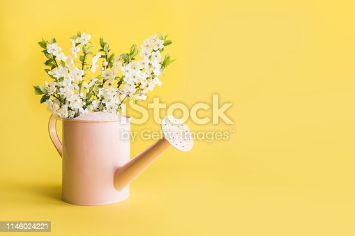 Bouquet white flowers blooming fruit tree in decorative watering can with on yellow. Gardening concept. Spring.