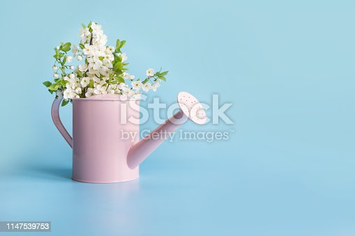 istock Bouquet white flowers blooming fruit tree in decorative watering can. Gardening spring concept. 1147539753