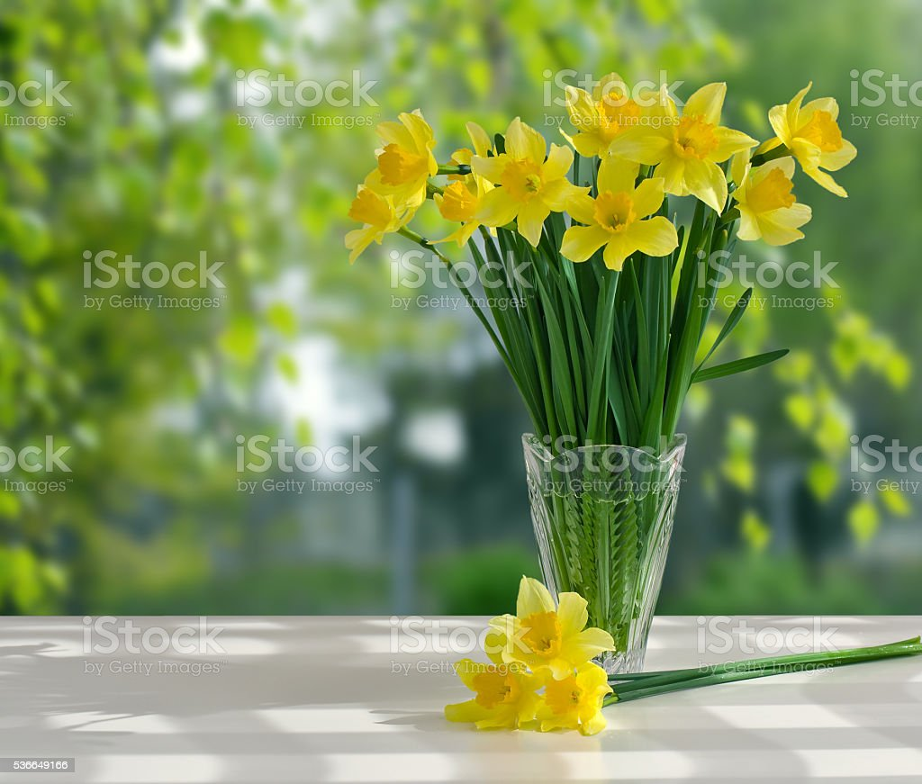 Bouquet yellow daffodils in vase on background of garden stock photo