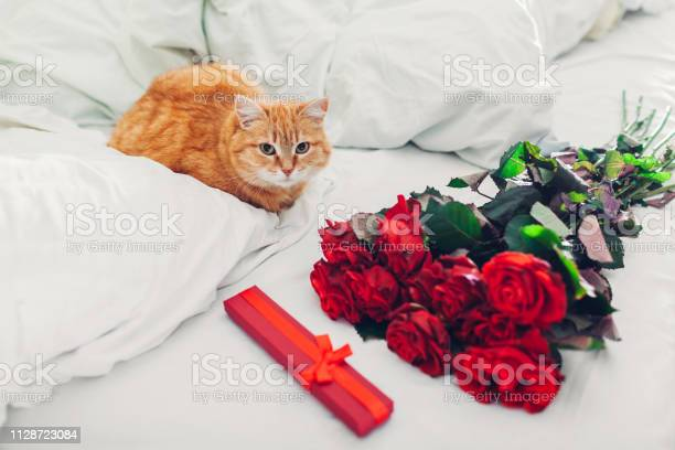 Bouquete of roses and gift box as surprise for valentines day left on picture id1128723084?b=1&k=6&m=1128723084&s=612x612&h=noaaatfhvwyggf5xb1f1elrhlr1izlxjlonrgi zjk0=