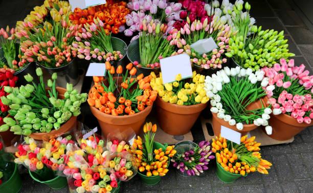 blumensträuße von tulpen auf den verkauf von den floristen, der blumenmarkt - günstig nach amsterdam stock-fotos und bilder