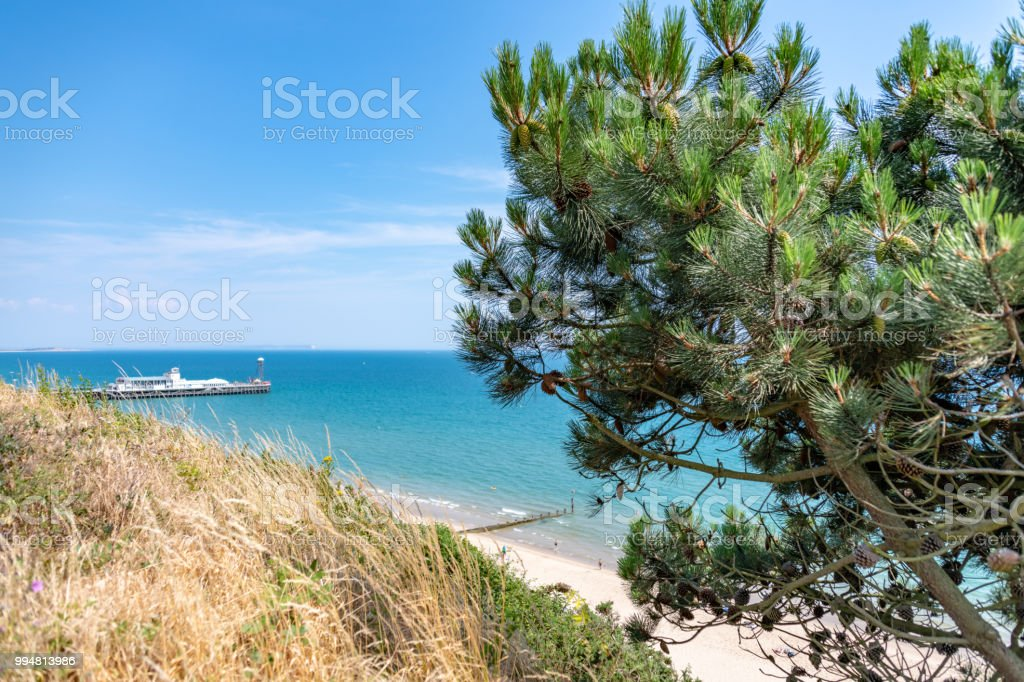 Bournemouth seafront and beach with a pine tree stock photo