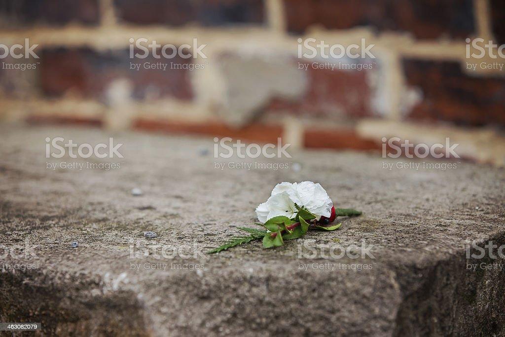 Boutonniere and Brick Wall stock photo
