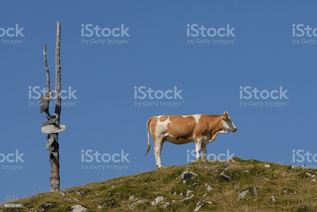Bovine on the Skyline royalty-free stock photo