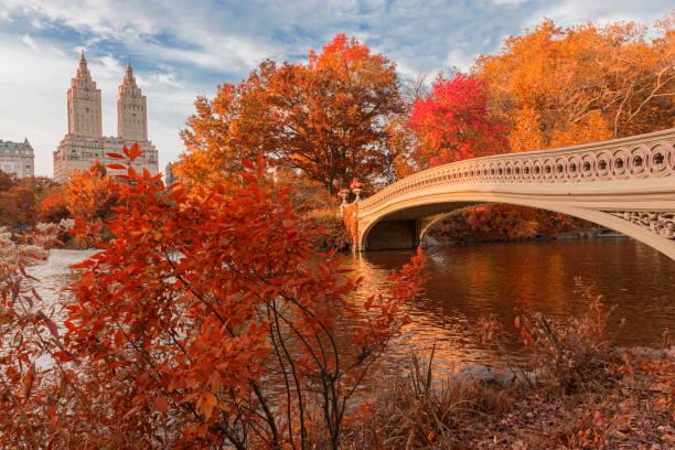 bow bridge in central park at autumn - central park manhattan zdjęcia i obrazy z banku zdjęć