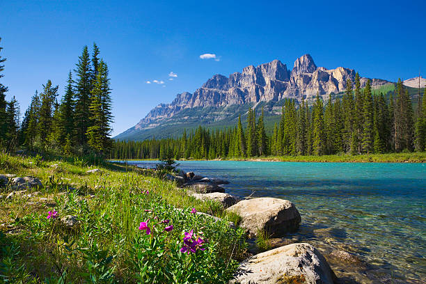 bow river, castle mountain, banff national park canada, wildflowers, copyspace - banff national park stock photos and pictures