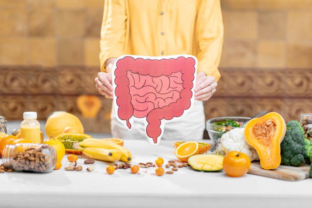 Bowel model and variety of healthy fresh food stock photo
