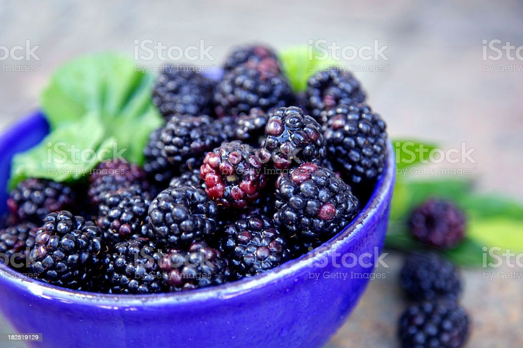 Bowl of blackberries royalty-free stock photo