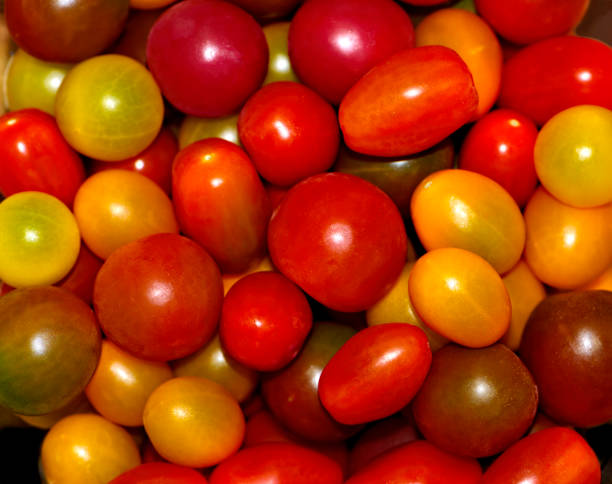 Bowl of Colorful Fresh Cherry Tomatoes