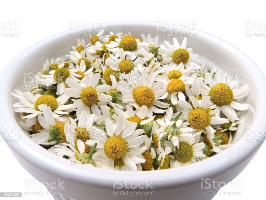 Bowl of Fresh Chamomile Flowers Herbal Alternative Medicine stock photo