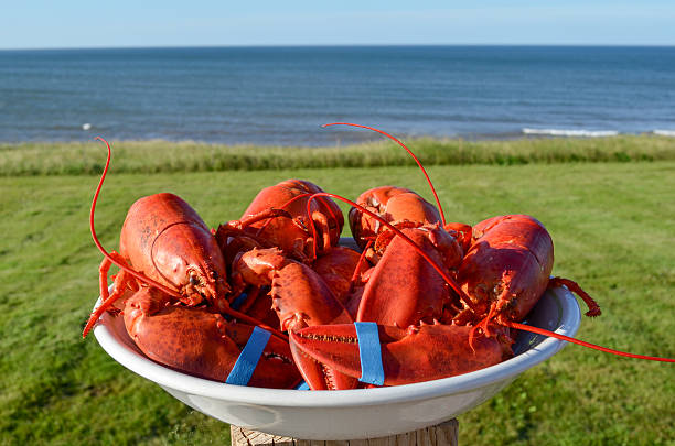 bowl of fresh cooked lobsters - prince edward island stock photos and pictures