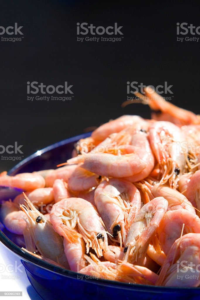 Bowl of Shrimps royalty-free stock photo