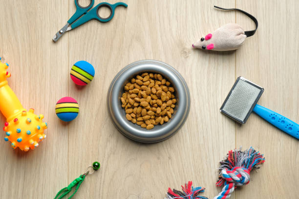 Bowl with dry kibble food and cat accessories on wooden table. Top view pet care and training concept. Veterinary shop banner mockup.