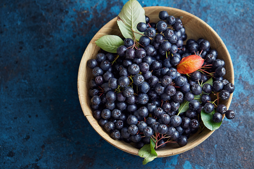Bowl with freshly picked homegrown aronia berries.