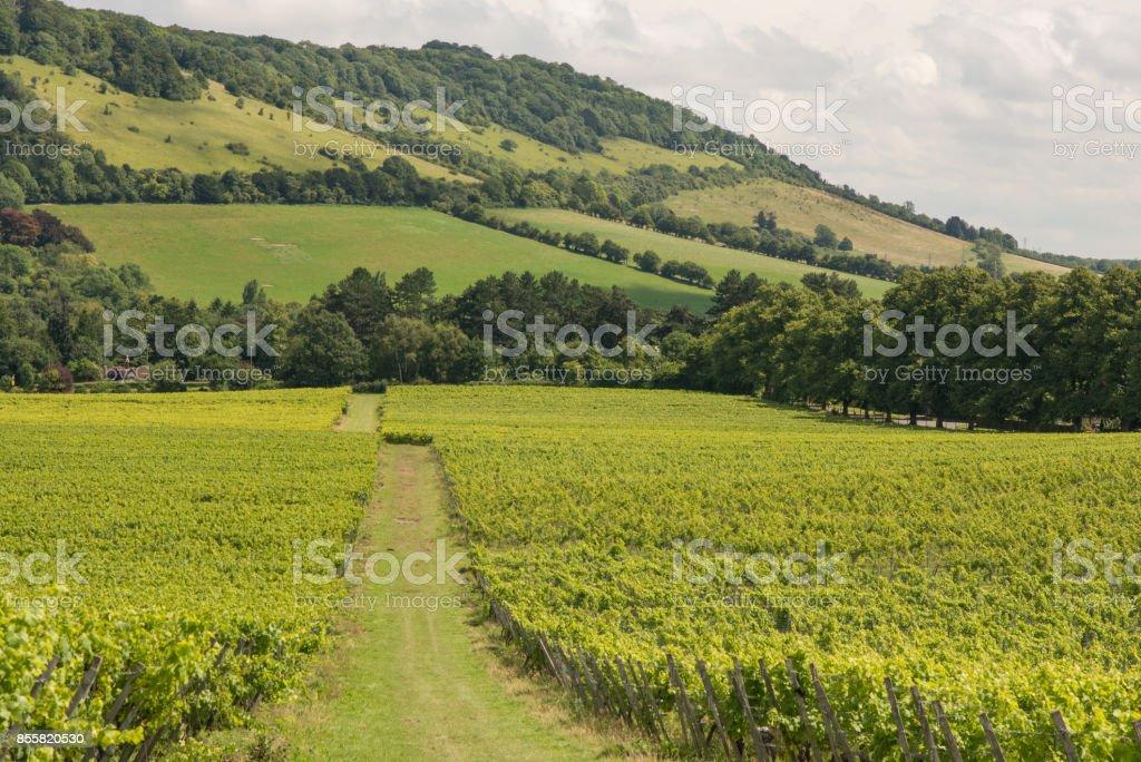 Box Hill at Dorking, Surrey, England stock photo