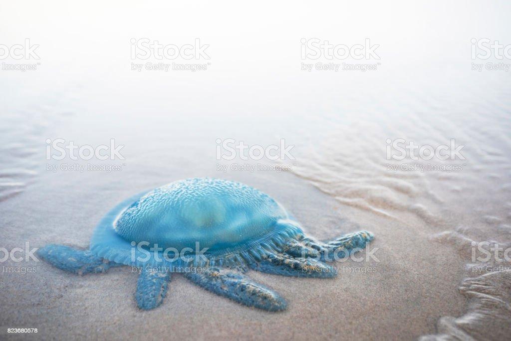 Box Jellyfish stock photo