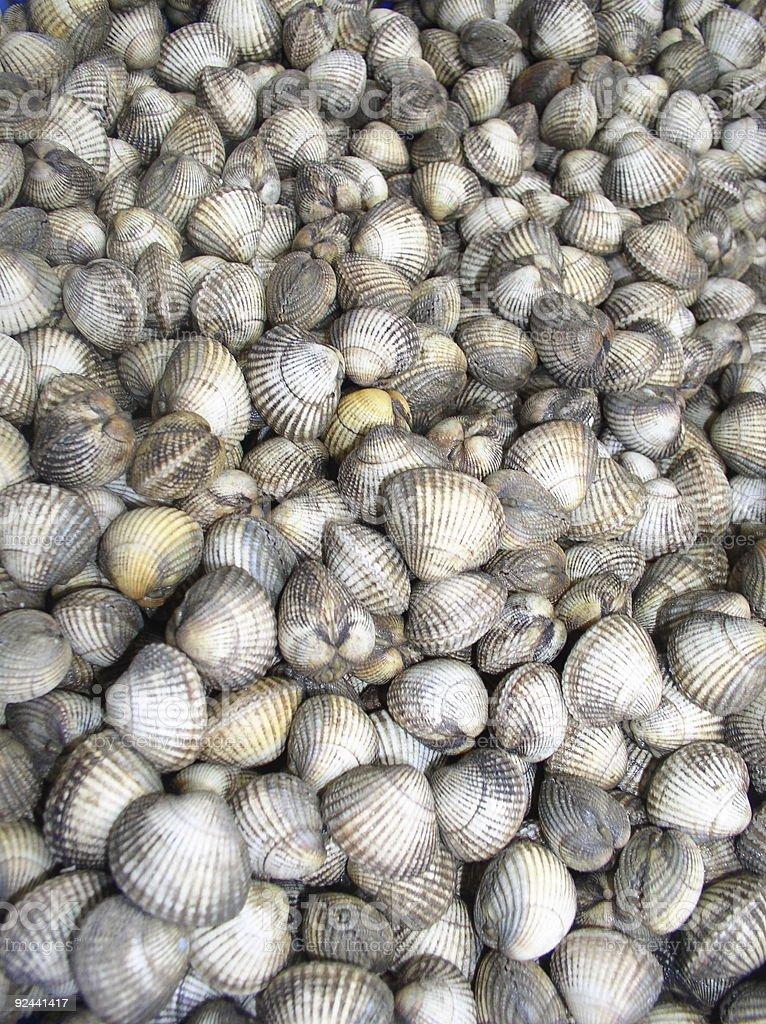Box of clams royalty-free stock photo