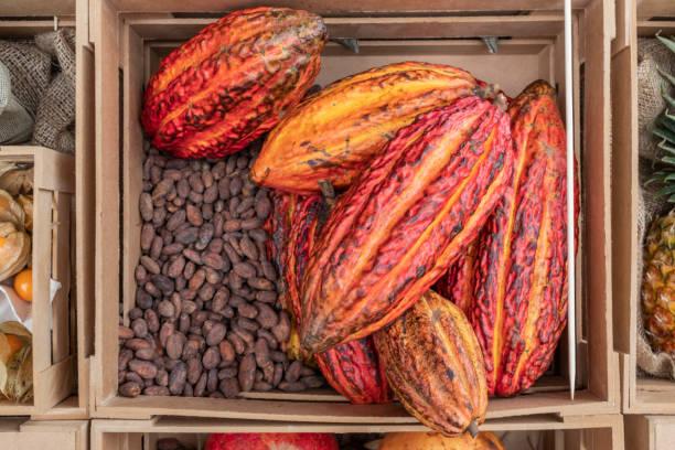盒與可哥水果和種子。巧克力。圖像檔