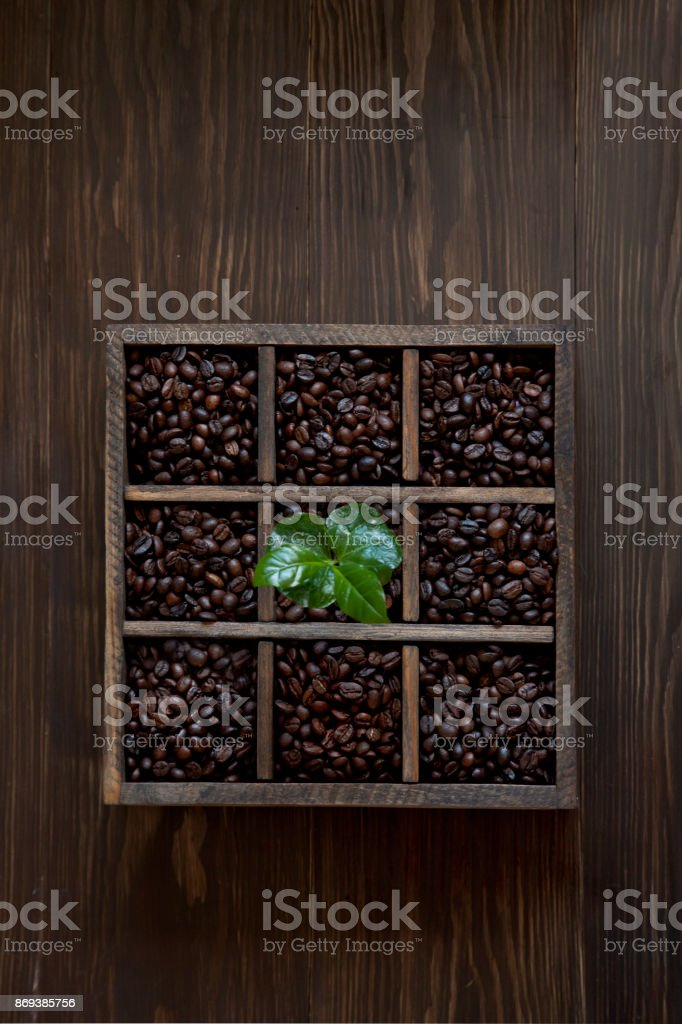 Box with coffee beans and coffee tree sprout. Background, top view, isolate stock photo