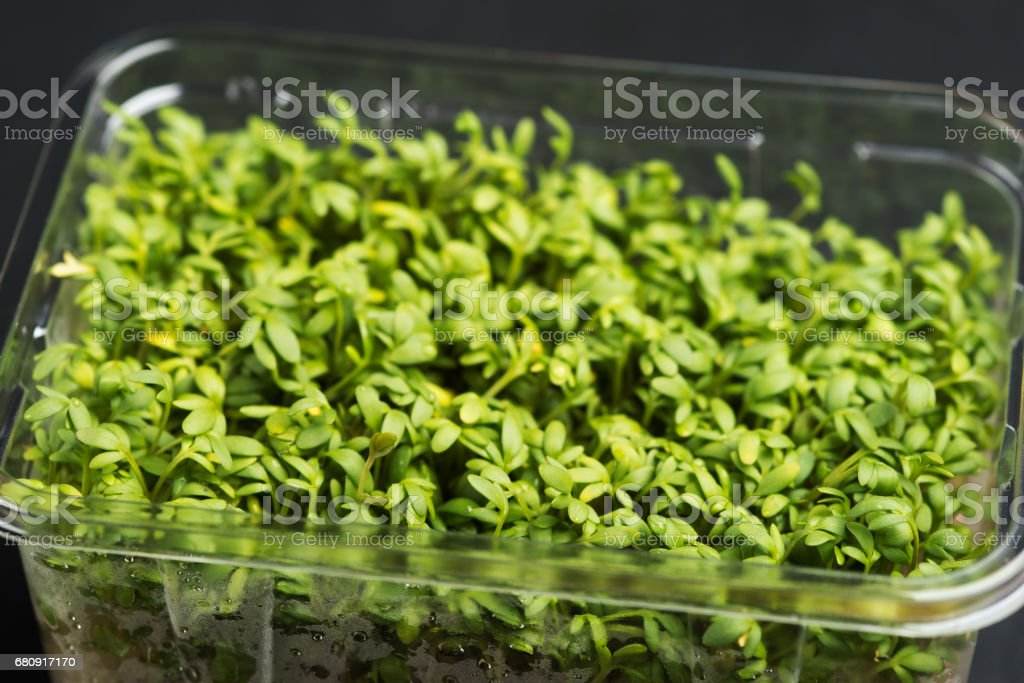 Box with fresh green cress royalty-free stock photo
