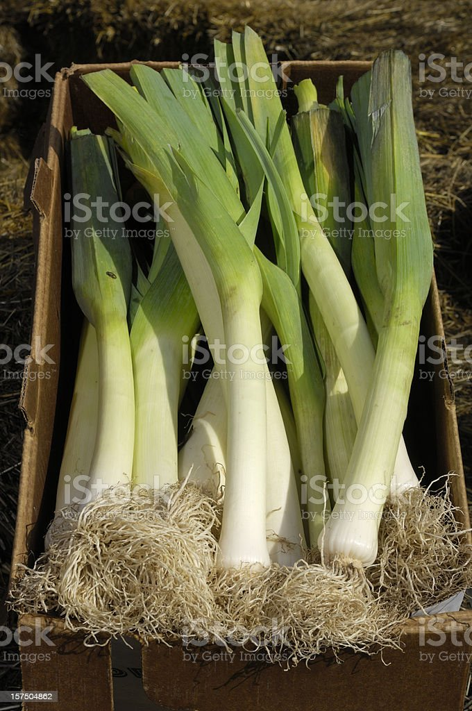 Boxed Leeks Ready for Shipping to Market royalty-free stock photo