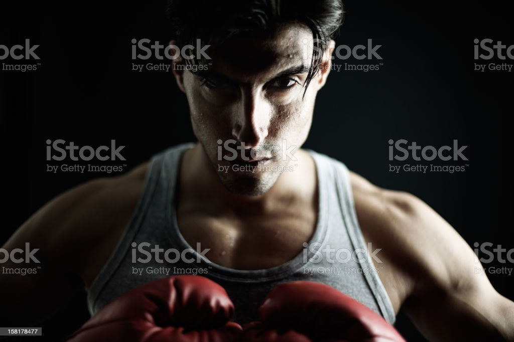 Boxer on black, male. stock photo