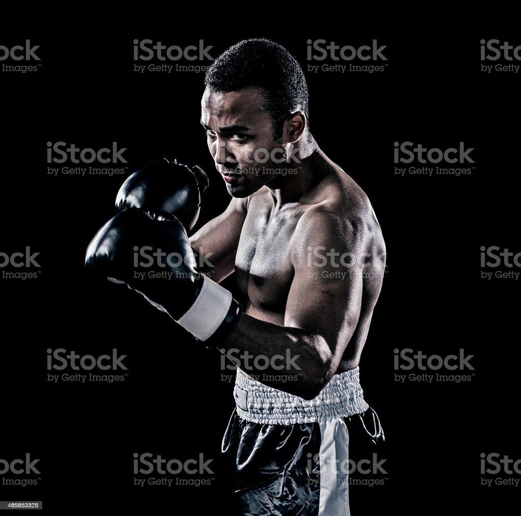 Boxer stock photo