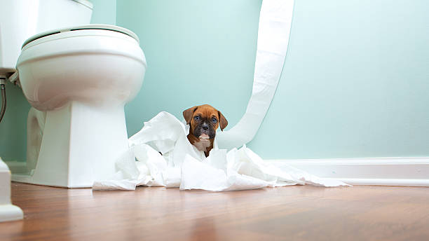 Boxer Puppy In Toilet Paper Boxer Puppy playing in toilet paper in the bathroom toilet paper stock pictures, royalty-free photos & images