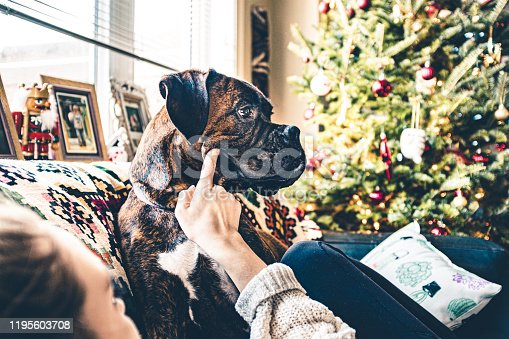 Young woman and boxer puppy playful for Christmas Holidays, in the living room.