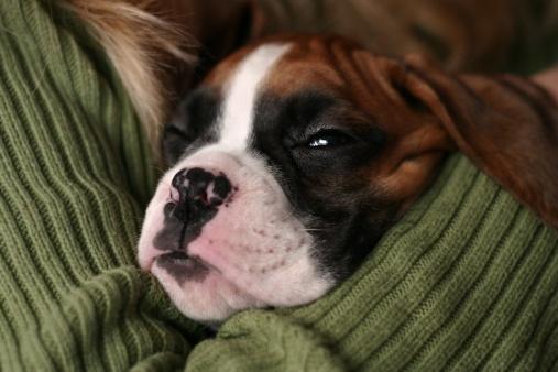 My beautiful dog, Pampita, sleeping with tongue out
