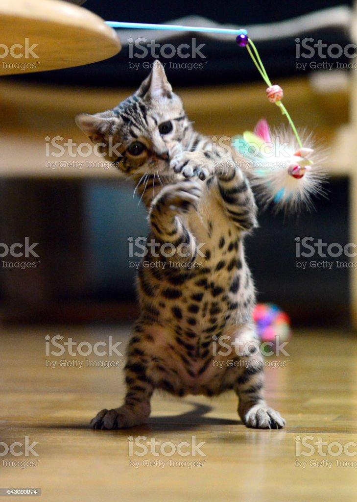 Boxing cat stock photo