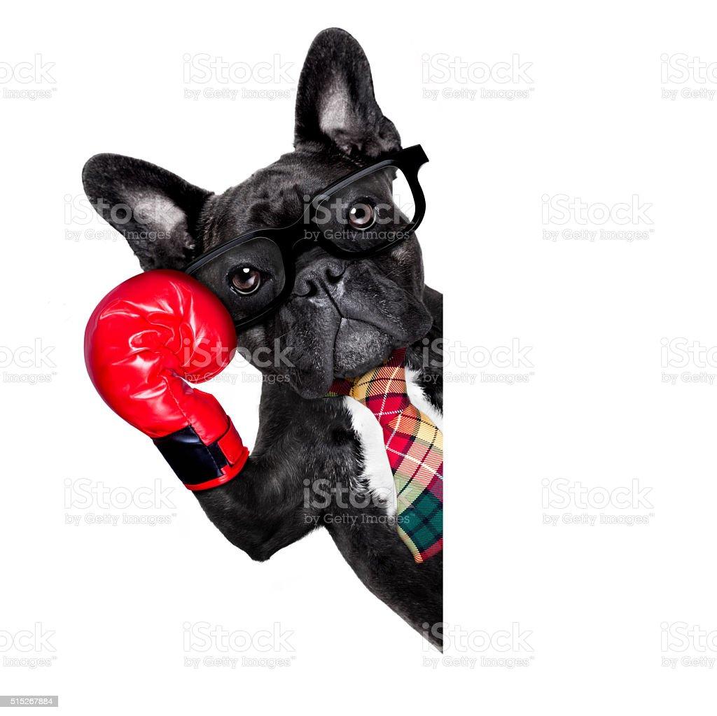 Boks Pies – zdjęcie